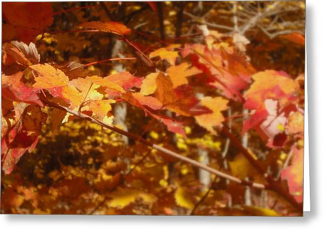 Fall Color Greeting Card by John Julio