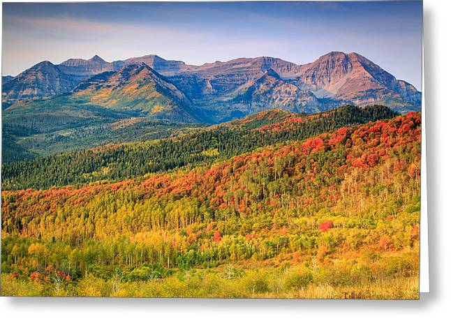 Fall Color On The East Slope Of Timpanogos. Greeting Card by Johnny Adolphson