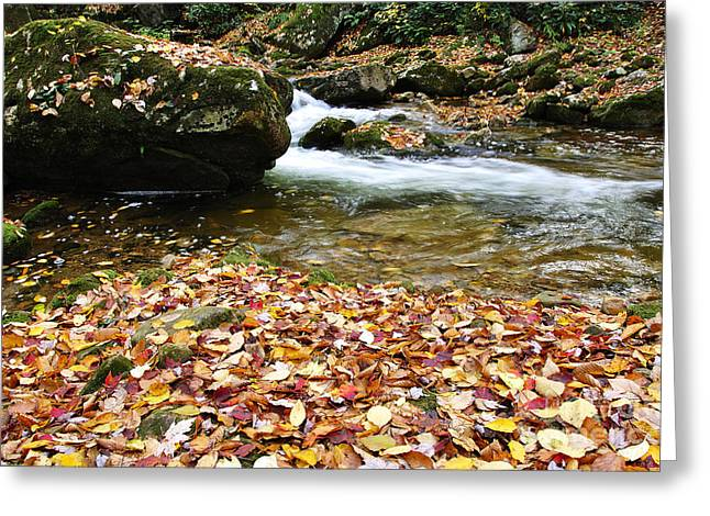 Fall Color Rushing Stream Greeting Card by Thomas R Fletcher