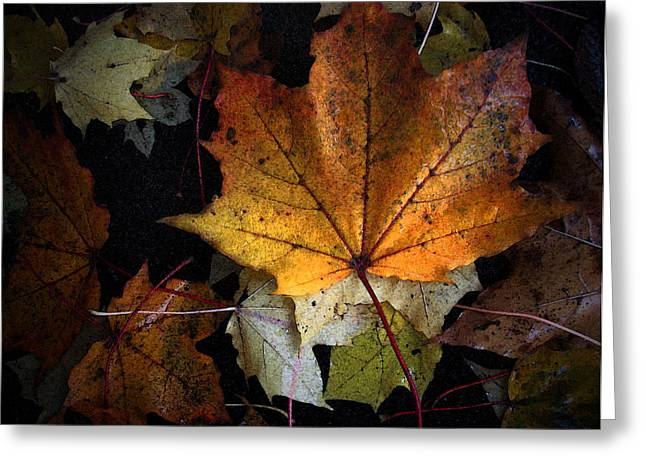 Fall Color Series II Greeting Card
