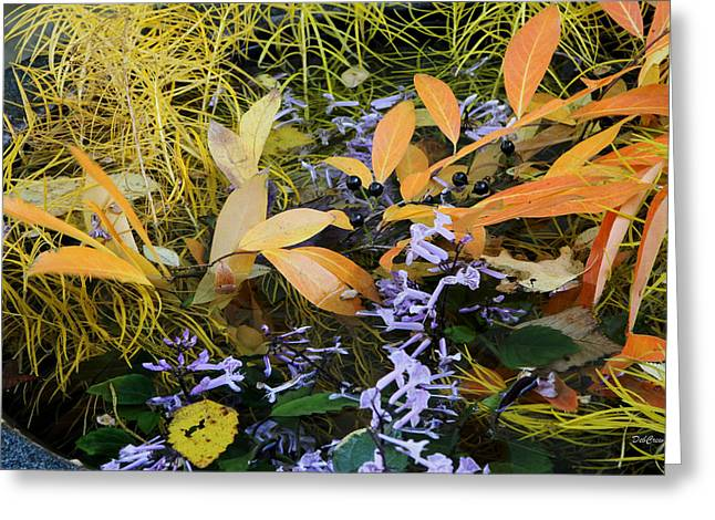 Greeting Card featuring the photograph Fall Color Soup by Deborah  Crew-Johnson