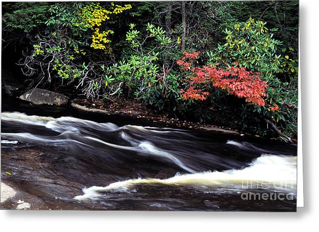 Fall Color Swallow Falls State Park Greeting Card by Thomas R Fletcher
