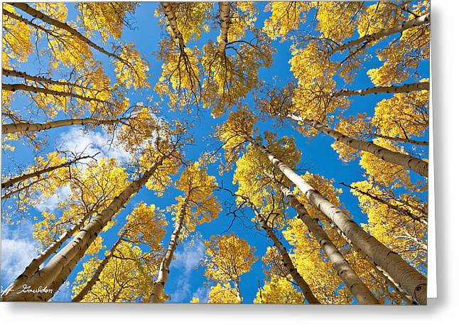 Fall Colored Aspens In The Inner Basin Greeting Card