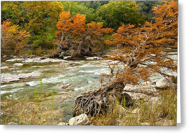 Fall Colors Along The Pedernales River Greeting Card by Mark Weaver