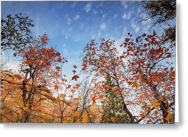 Fall Colors Along West Fork Trail Greeting Card by Kunal Mehra