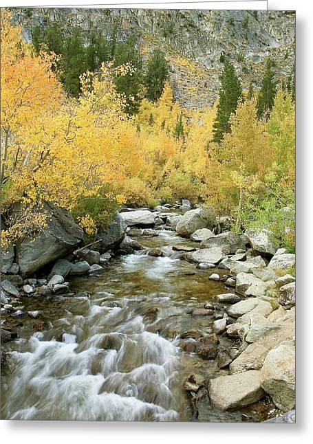 Fall Colors And Rushing Stream - Eastern Sierra California Greeting Card by Ram Vasudev