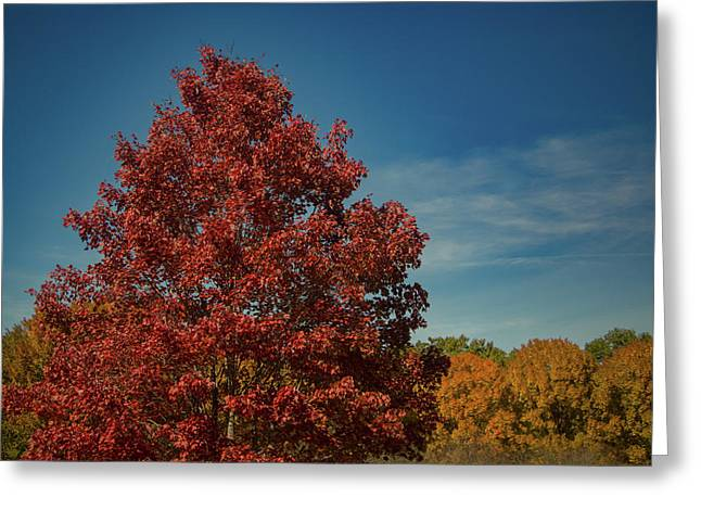 Greeting Card featuring the photograph Fall Colors, Ashville, Nc by Richard Goldman