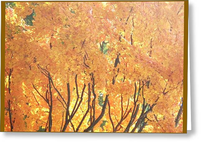 Fall Colors At Cape May Greeting Card by Eric  Schiabor