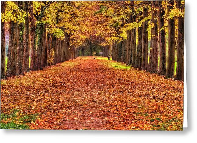 Fall Colors Avenue Greeting Card