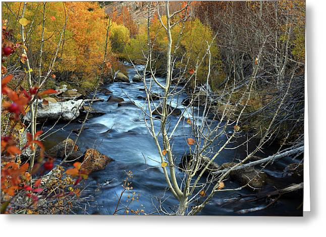 Greeting Card featuring the photograph Fall Colors Bishop Creek by Dung Ma