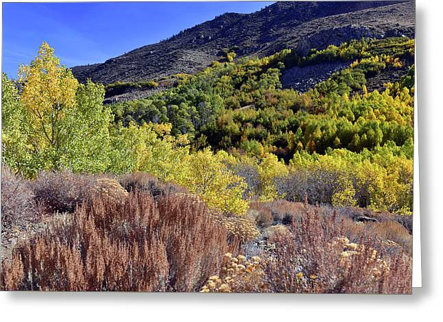 Greeting Card featuring the photograph Fall Colors In Bishop Creek  by Dung Ma