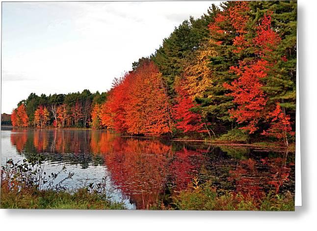 Fall Colors In Madbury Nh Greeting Card by Nancy Landry