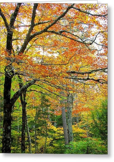 Fall Colors In Maine 1 Greeting Card by Jonathan Hansen