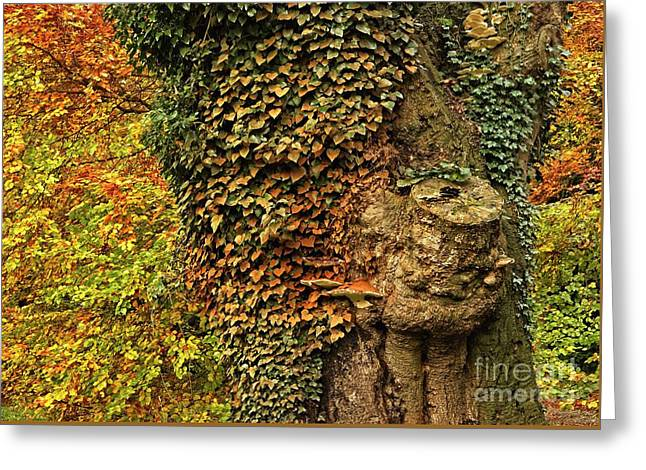 Fall Colors In Nature Greeting Card