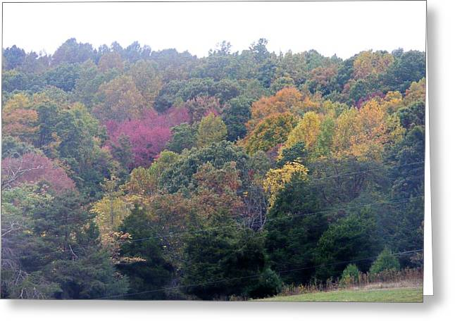 Fall Colors In Rockbridge County Greeting Card by Eddie Armstrong