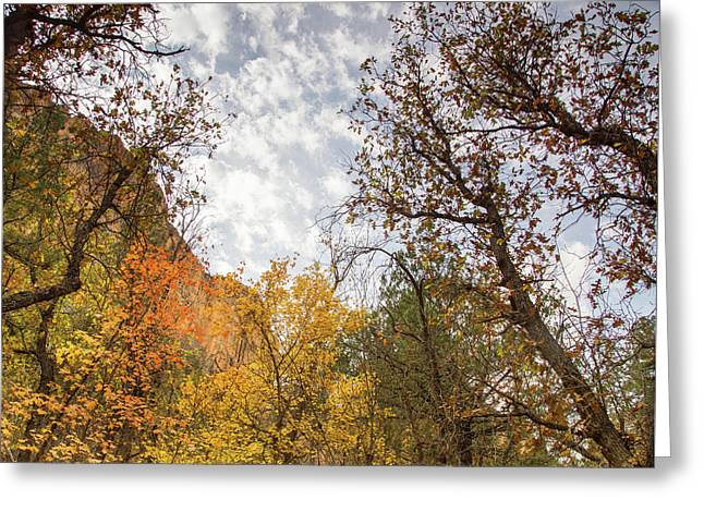 Fall Colors In The Desert Greeting Card by Kunal Mehra