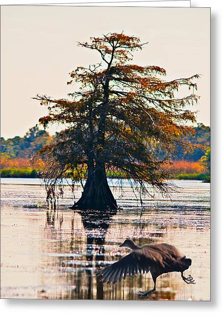 Fall Colors In The Marsh Greeting Card by Bill Perry