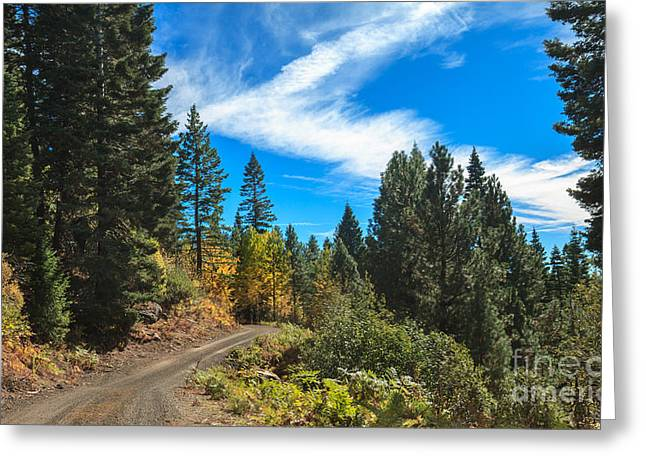 Fall Colors In The Mountains Greeting Card by Robert Bales