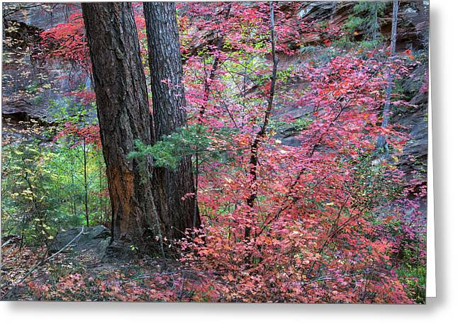 Fall Colors In West Fork Of Oak Creek Canyon Greeting Card