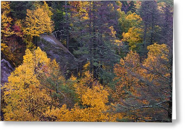 Greeting Card featuring the photograph Fall Colors by Ken Barrett