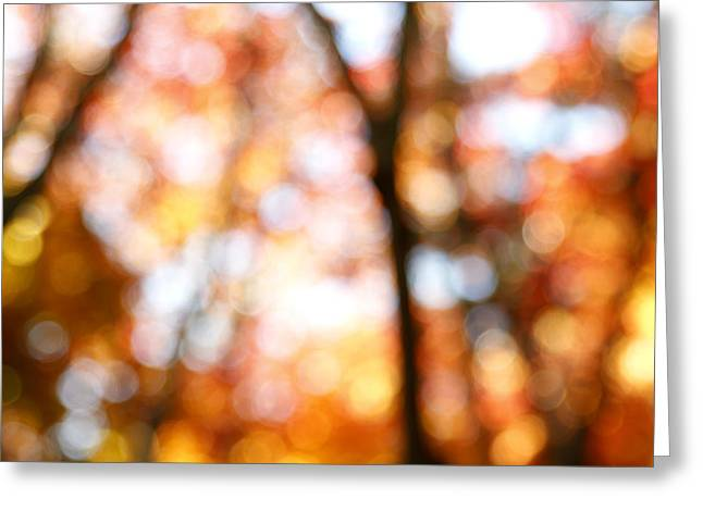 Tree Abstract Greeting Cards - Fall colors Greeting Card by Les Cunliffe
