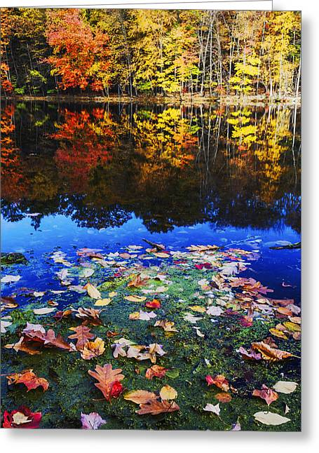 Fall Colors Near Bushkill Falls State Park Pa Usa Greeting Card