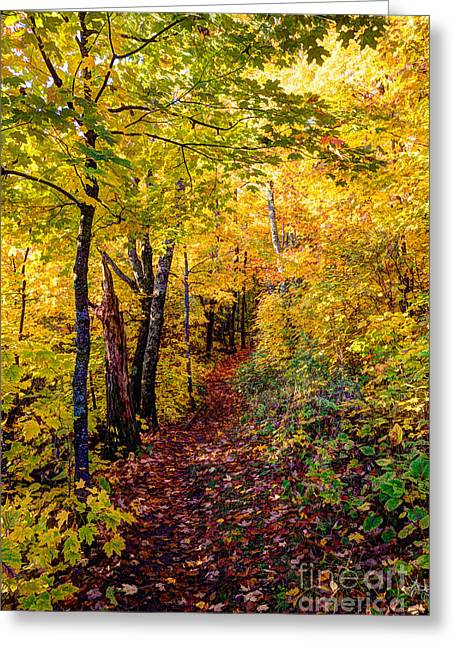 Fall Colors Oberg Mountain North Shore Minnesota Greeting Card by Wayne Moran