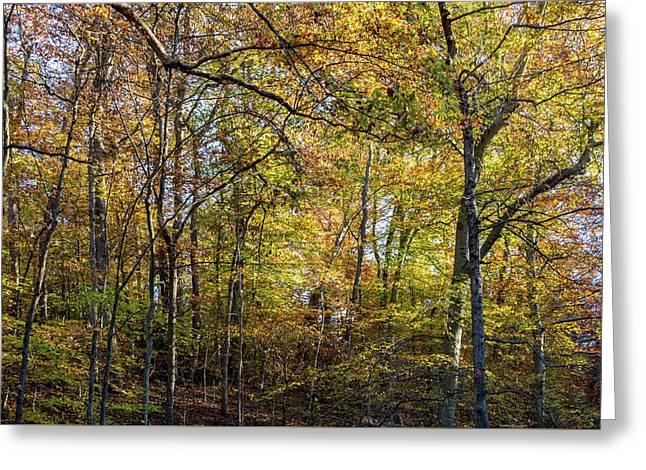 Fall Colors Of Rock Creek Park Greeting Card