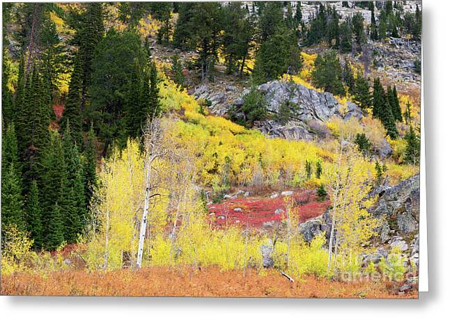 Fall Colors On Rocky Cliffs Greeting Card by Mike Cavaroc