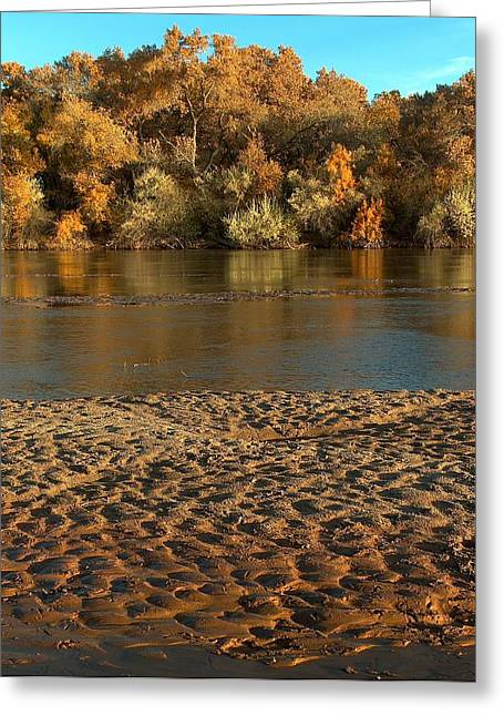 The Nature Center Greeting Cards - Fall Colors on the Rio Grande 1 Greeting Card by Tim McCarthy