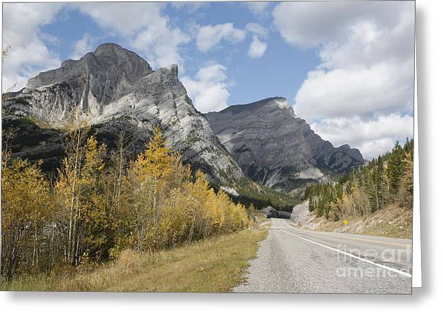 Fall Colours On Hwy #40 Kananaskis Greeting Card