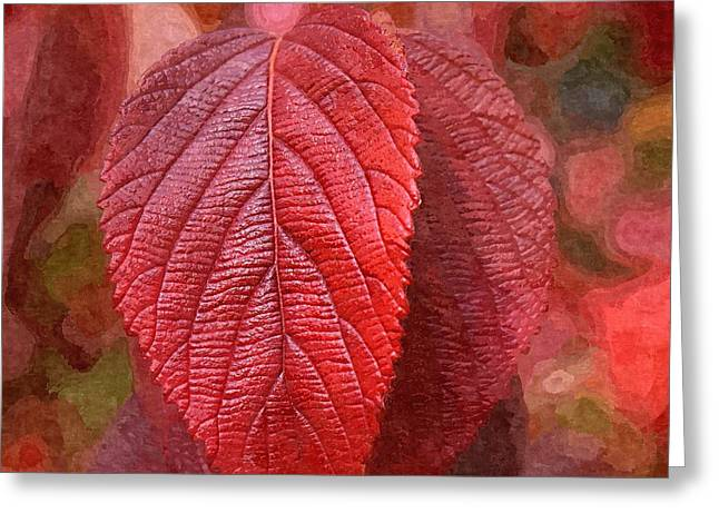 Fall Crimson Greeting Card by Nick Kloepping