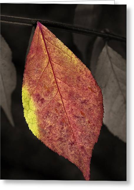 Fall Elder Leaf Greeting Card