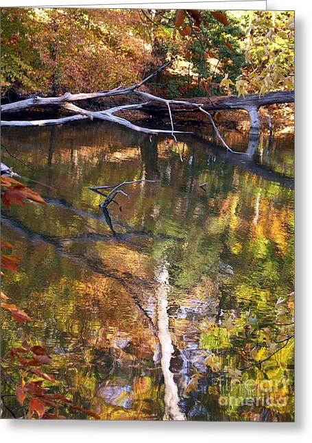 Fall Fallen Greeting Card by J L  Gould