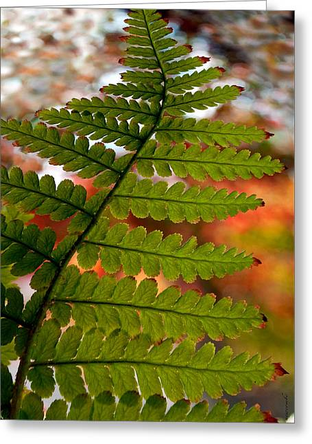 Fall Fern Greeting Card by Gwyn Newcombe