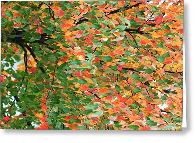 Fall Festivities Greeting Card