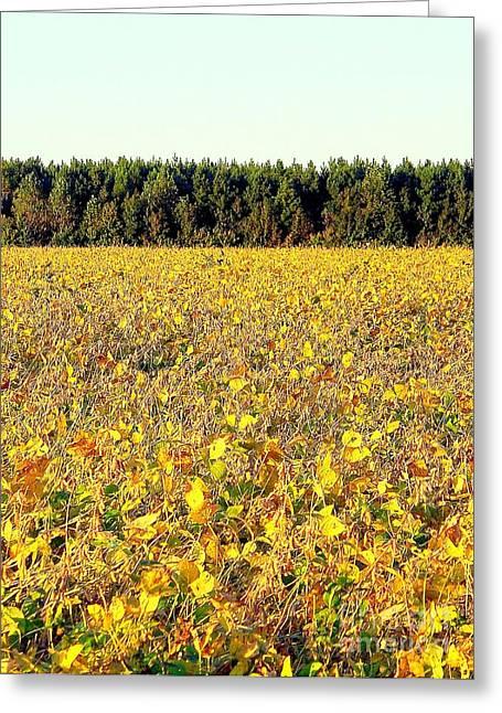 Fall Field Greeting Card by Peyton Imes