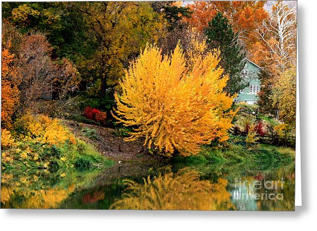 Fall Fireworks Greeting Card by Carol Groenen