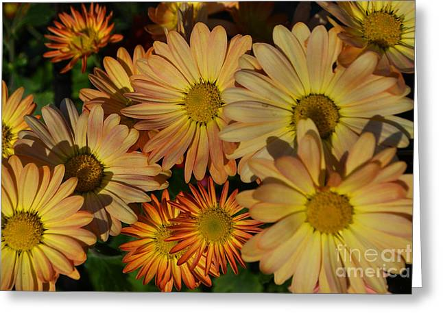 Fall Flowers In Madison  Greeting Card by Amy Lucid