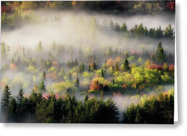 Fall Fog Greeting Card