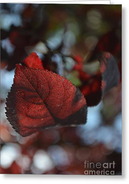 Fall Foliage 2 Greeting Card by Eva Maria Nova