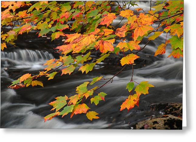 Fall Foliage In Acadia National Park  Greeting Card by Juergen Roth