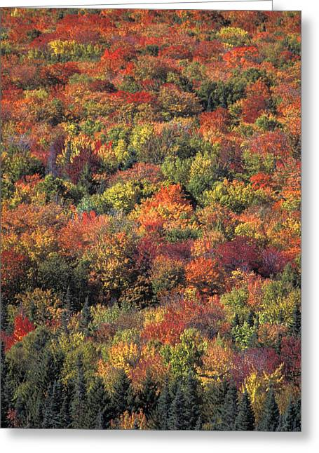 Fall Foliage In New Hampshires White Greeting Card by Richard Nowitz