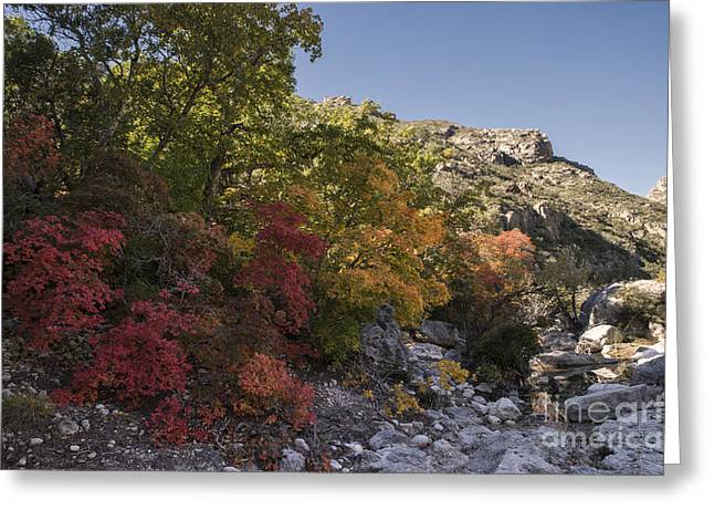 Fall Foliage In The Guadalupes Greeting Card by Melany Sarafis