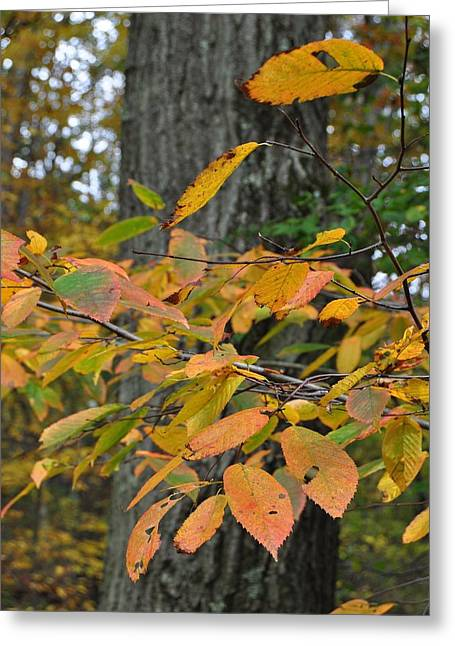 Fall Foliage Greeting Card by JAMART Photography