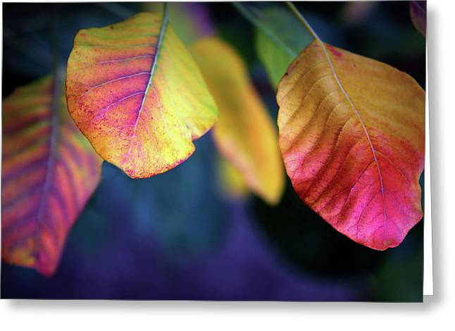 Fall Foliage Greeting Card by Jessica Jenney