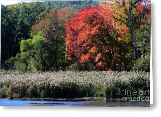 Fall Foliage Marsh Greeting Card