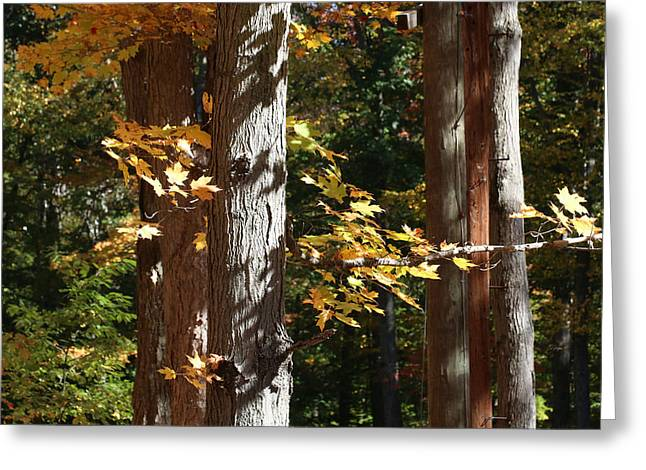 Fall Forest 4 Greeting Card by William Selander