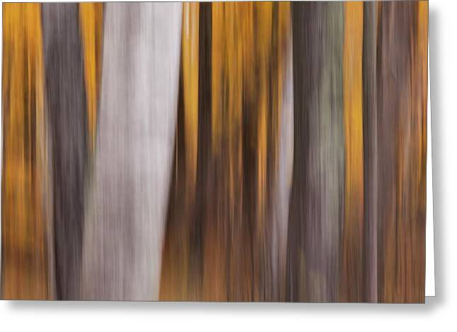 Greeting Card featuring the photograph Fall Forest Abstract by Brenda Tharp