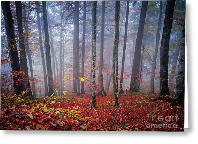 Greeting Card featuring the photograph Fall Forest In Fog by Elena Elisseeva
